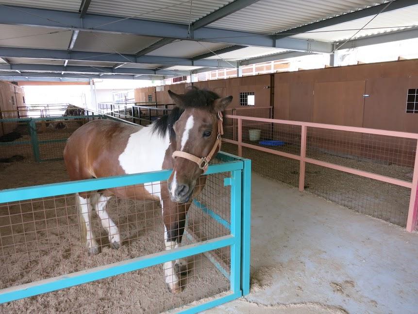 ワールド牧場馬